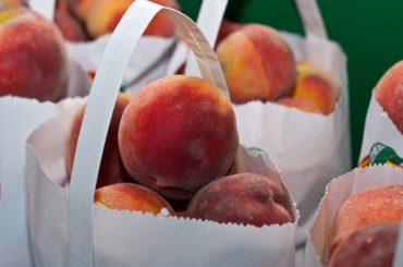 Dezastrele din pomicultura europeană lasă fabricile de procesare fără fructe