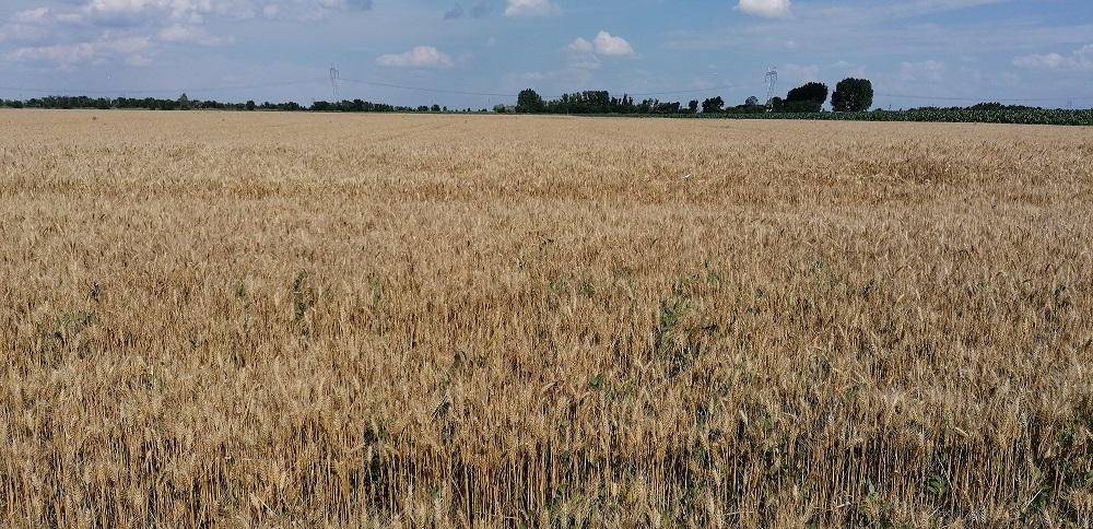 Cooperativa agricolă Țara Mea, cifră de afaceri de zeci de milioane de euro