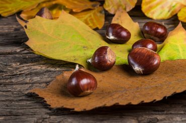 Castanul comestibil ( Castanea sativa ), o cultură de viitor în Uniunea Europeană; ce suprafață ar trebui cultivată pentru a scădea dependența de Turcia și China