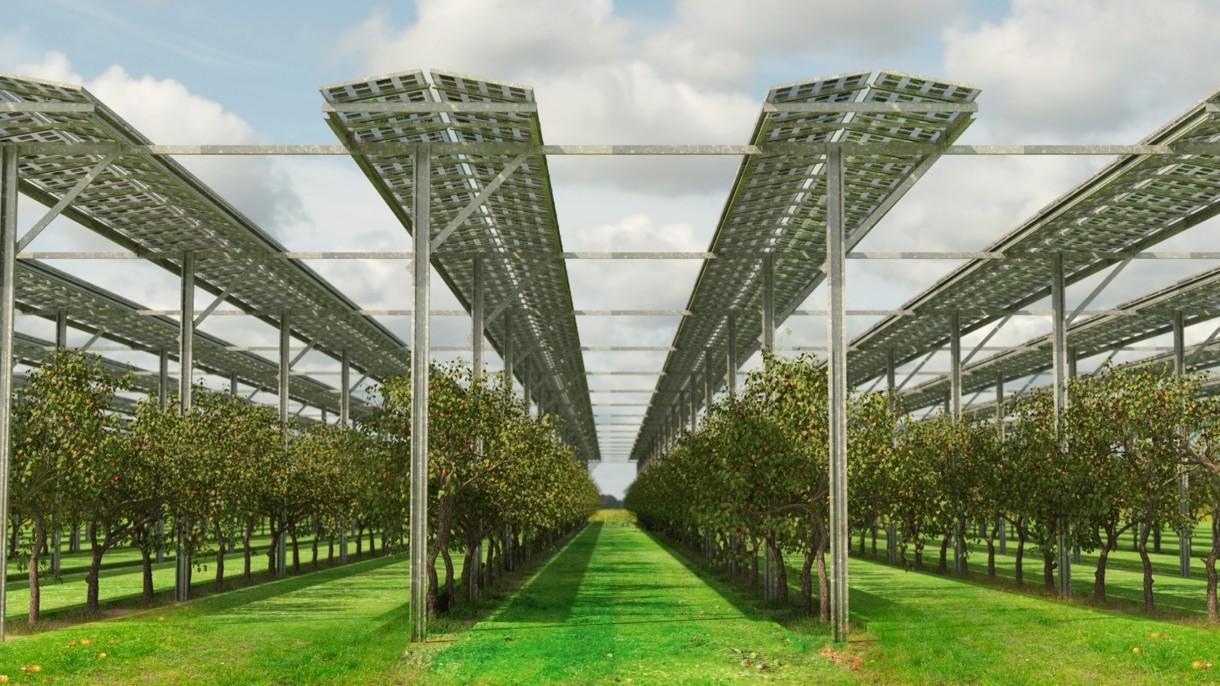 AGRIVOLTAICA în expansiune: un fermier german cultivă zmeur și afin sub panouri fotovoltaice, obținând pe aceeași suprafață și fructe, și energie verde