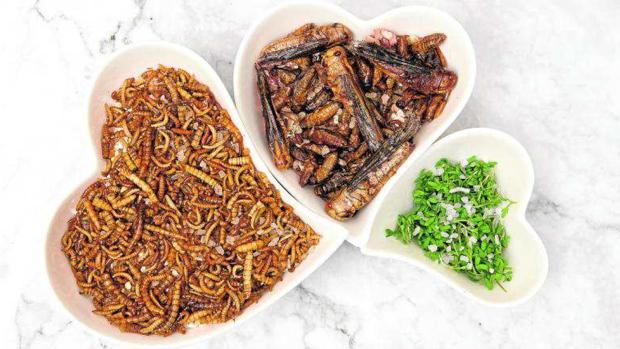Alimentele viitorului: o firmă din Spania a înființat o fermă de greieri și din făina obținută prin măcinarea acestor insecte produce suplimente alimentare pentru sportivi