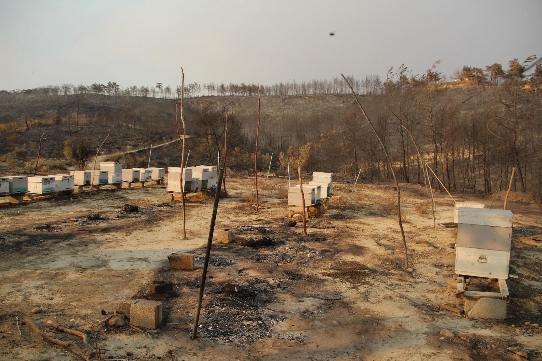 Stupi în flăcări! Apicultorii din Turcia, Grecia și Italia au înregistrat pagube considerabile din cauza incendiilor de pădure; dezastrul major constă în distrugerea bazei melifere