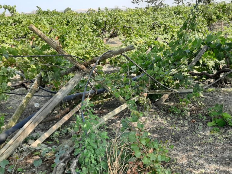 Culturi agricole distruse în sudul Italiei de o mână criminală; disperați, fermierii cer intervenția armatei