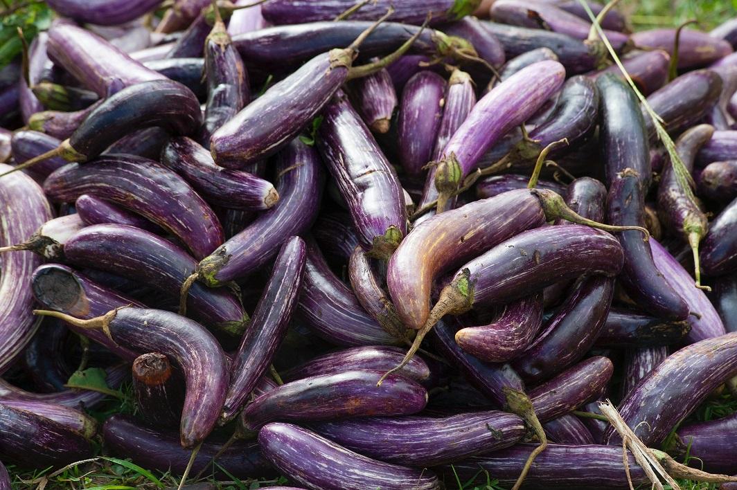 Suma investită de legumicultorii spanioli din Almeria pentru cultivarea unui hectar cu vinete în spațiu protejat; care este profitul? opacitate totală în ce privește sectorul legumicol din România