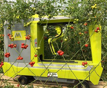 Șocul viitorului în legumicultură: o companie din Israel testează un robot care execută cinci operațiuni într-o seră cu tomate