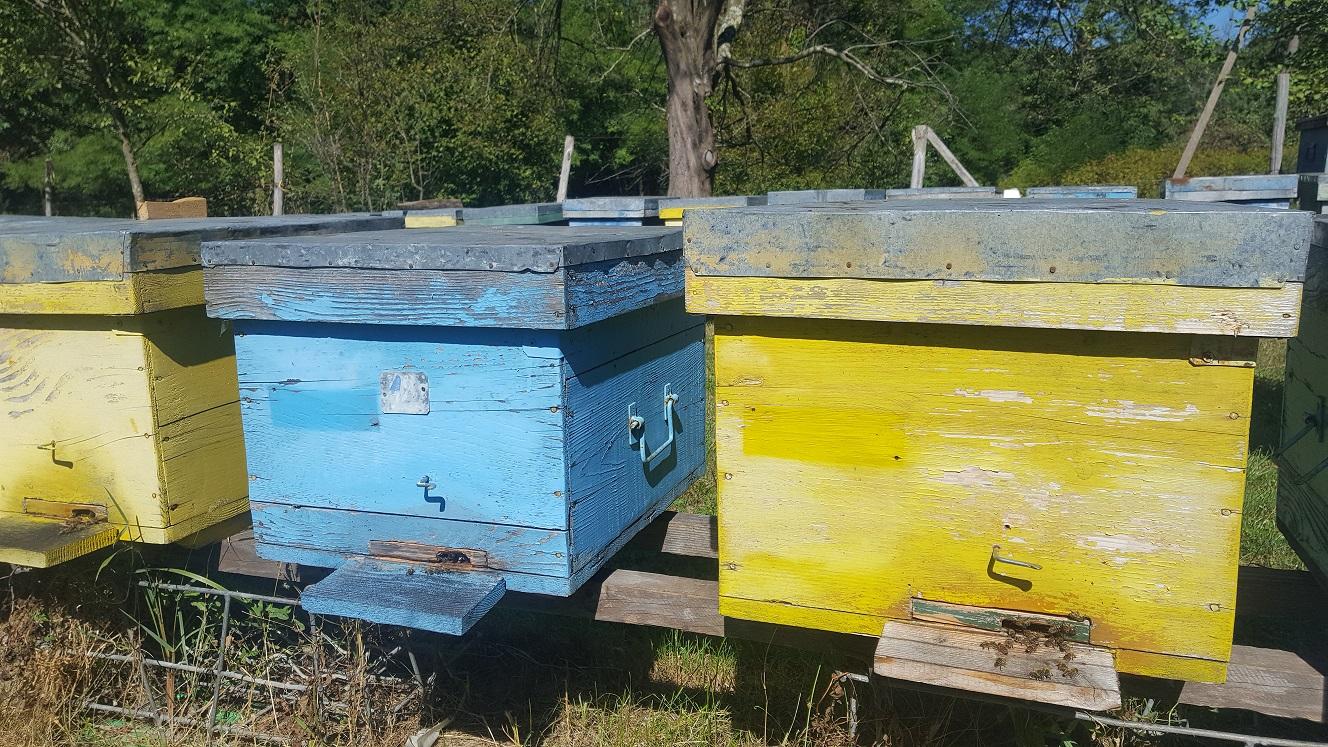 """Apicultorul Gheorghe Pleșia, din com. Tisău, jud. Buzău: """"anul acesta am obținut o medie de 30 kg de miere de la o familie de albine"""""""